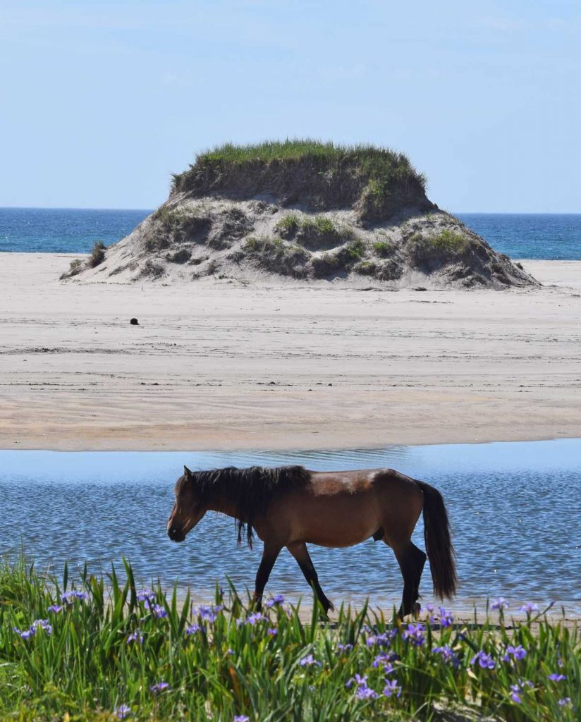 Horse ponds Sable Island