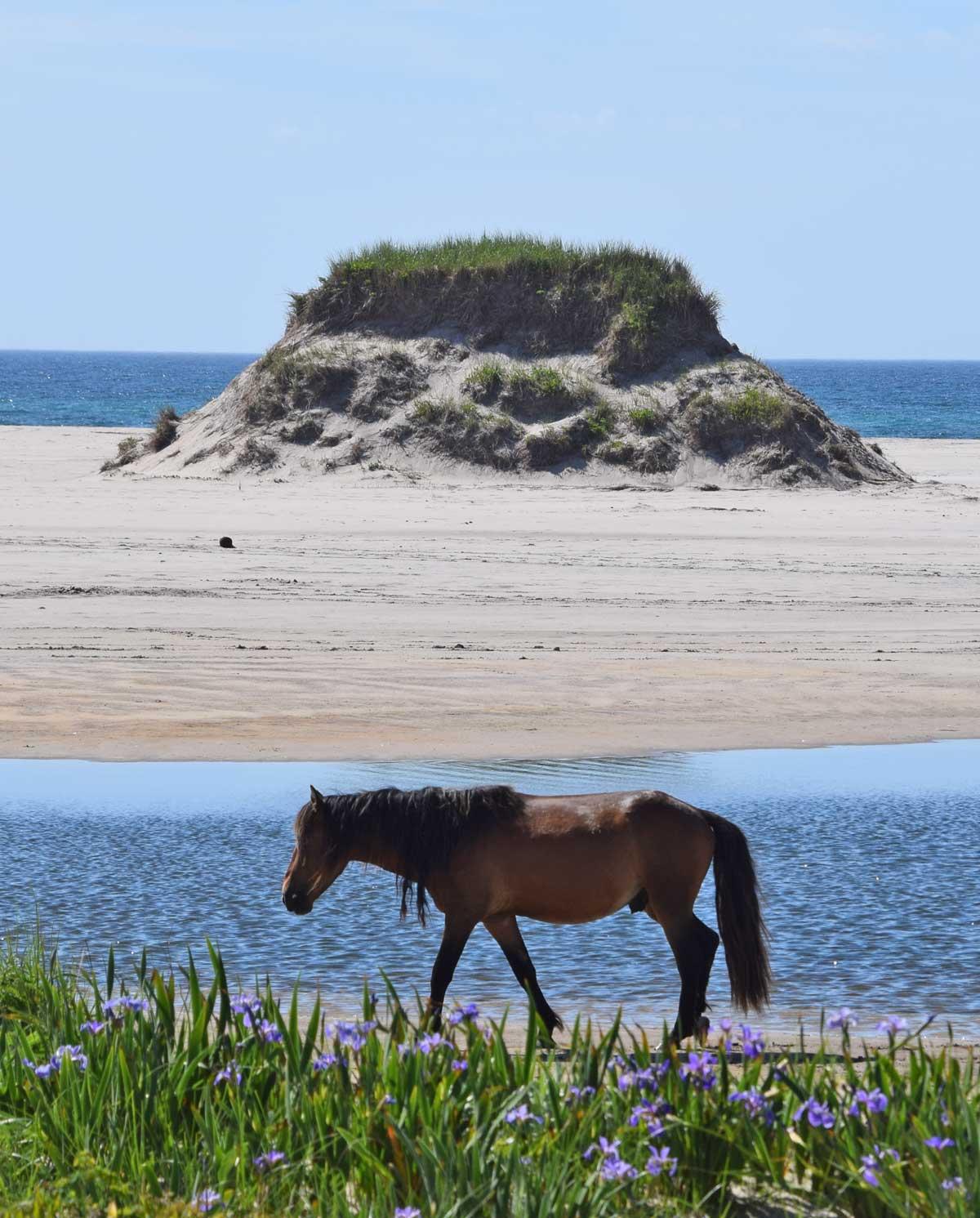 Horse ponds Sable Island