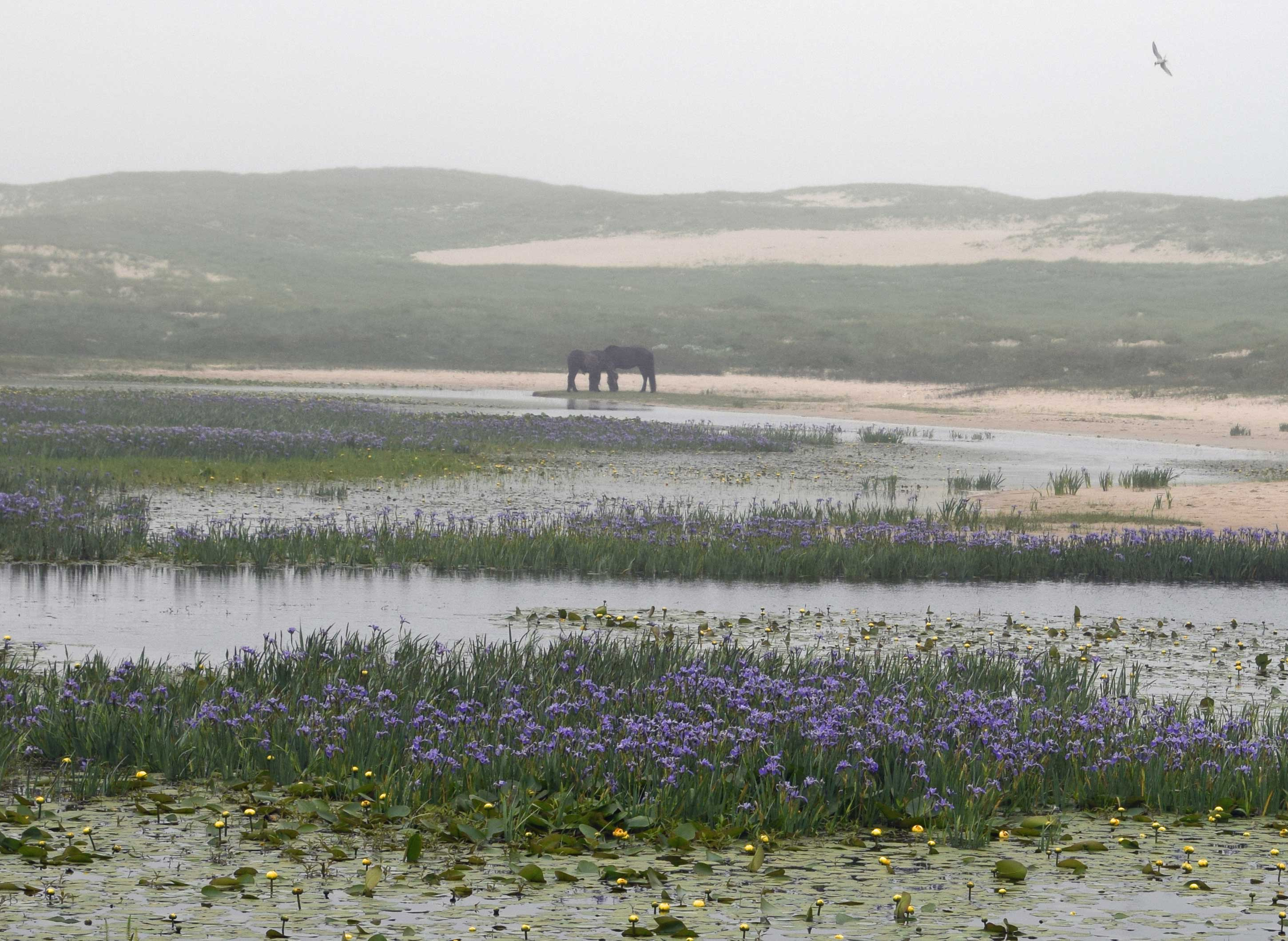 Horse fog and ponds
